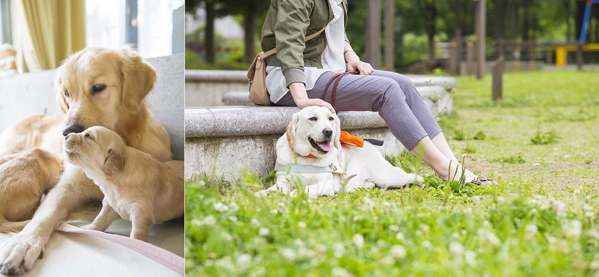 公益財団法人日本盲導犬協会
